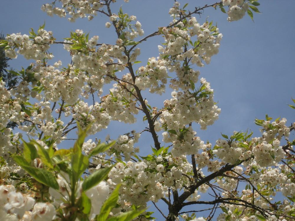 April_2010_017