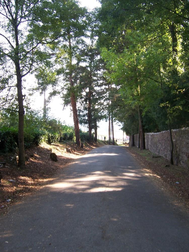 Camino_maria_051